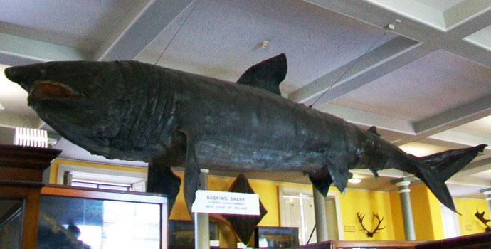 museu-naturaledit