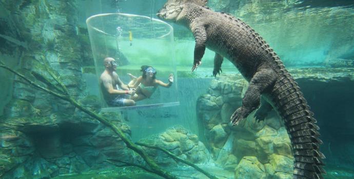 Nado com crocodilos na Austrália