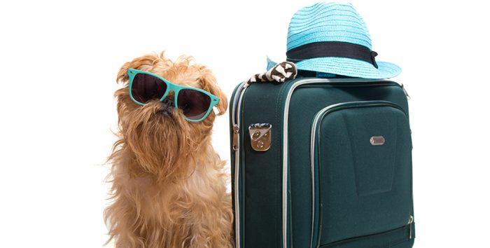 Foto cachorro e mala